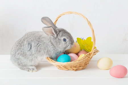 bunny with easter eggs on white background Stock Photo