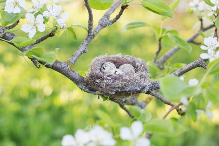 eggs in nest outdoor