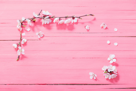 pink cherry flowers on pink wooden background