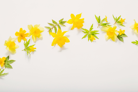 yellow spring flowers on white background