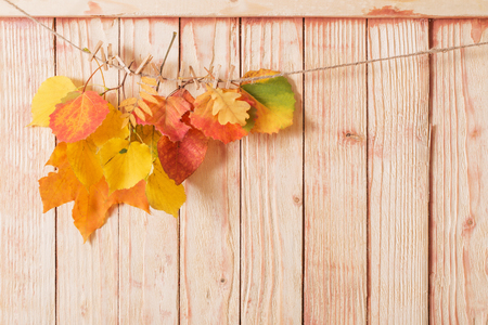 colour autumn leaves on wooden background