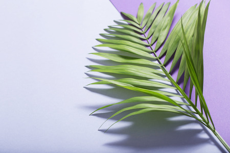 palm leaves on violet paper background 免版税图像