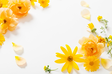 the yellow flowers on white background