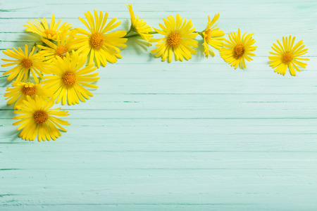 doronicum flowers on painted wooden background Imagens