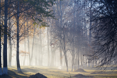 fog in autumn beautiful forest