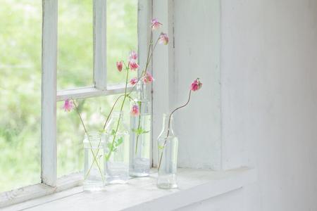 pink columbines in bottles on windowsill