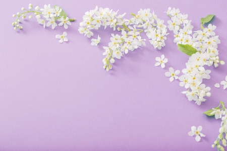bird cherry flowers on paper background Standard-Bild - 124556158