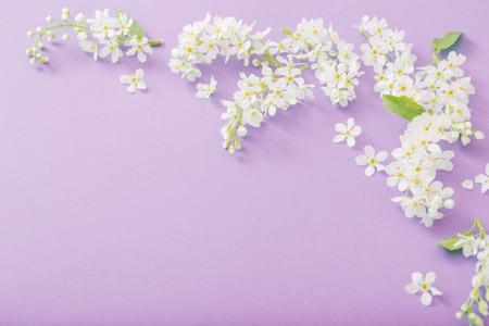 bird cherry flowers on paper background