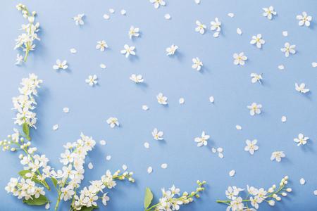 bird cherry flowers on paper background Standard-Bild - 124556159
