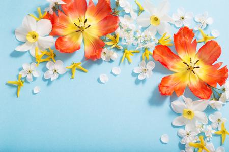 spring flowers on blue paper background Standard-Bild - 124556173