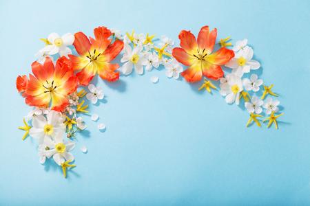 spring flowers on blue paper background Standard-Bild - 124556171