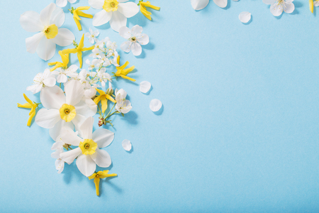 daffodils and cherry flowers on blue background background Standard-Bild - 124556172