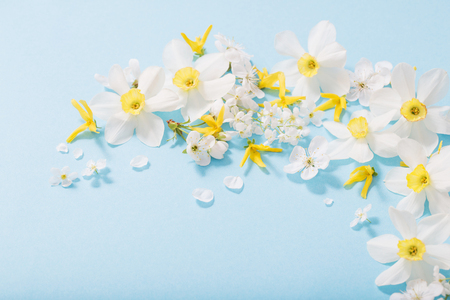 daffodils and cherry flowers on blue background background Standard-Bild - 124556177