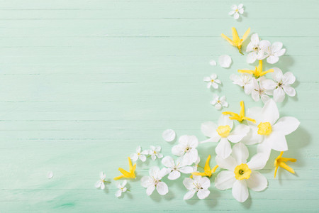 daffodils and cherry flowers on green wooden background Standard-Bild - 124556180