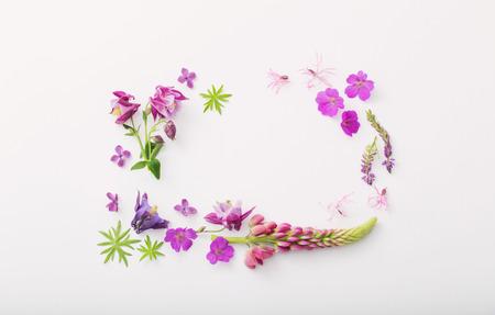 frame of summer flowers on white background Standard-Bild - 124556247