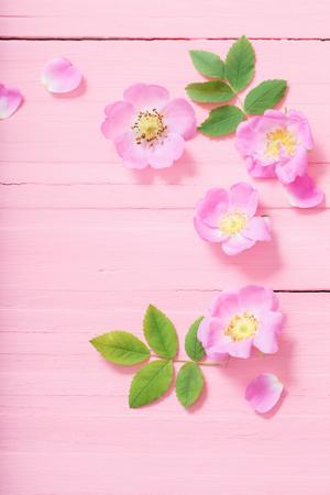 frame of pink roses on pink wooden background Standard-Bild - 124556256