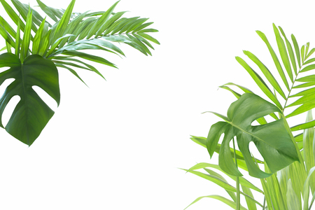 palm leaves on isolated white background