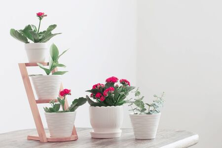 houseplants against  white wall on old wooden table 스톡 콘텐츠