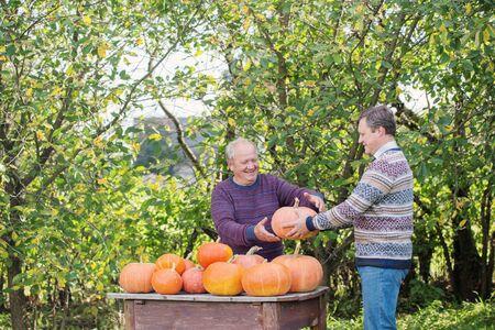 elderly men with orange pumpinks outdoor 스톡 콘텐츠