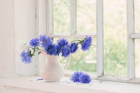 beautiful purple asters in  jug on  windowsill
