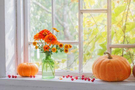 orange flowers with pumpkins on windowsill