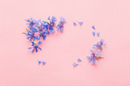 blue cornflowers on pink paper background