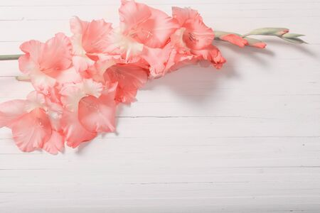 Gladioli on white wooden background