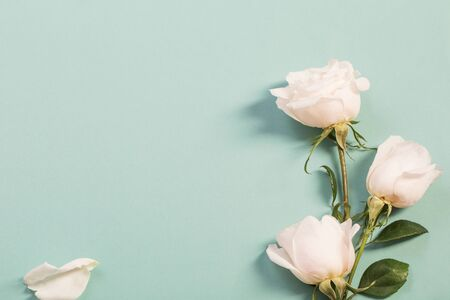beautiful roses on green paper background