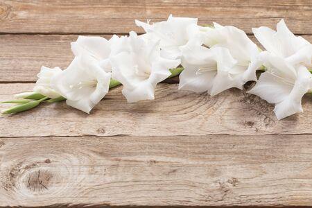 white gladiolus on wooden background