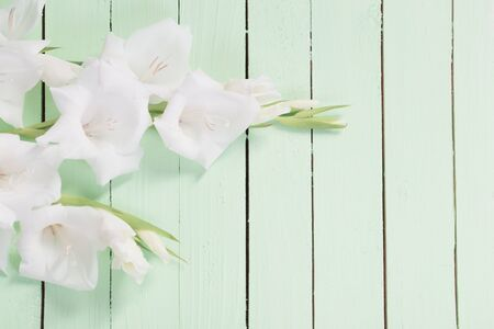 white gladiolus on green wooden background