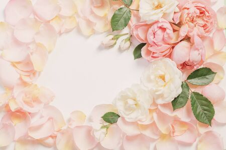rose flowers and petals on white  background