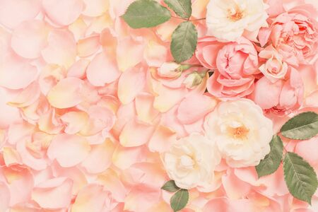 rose flowers and petals background