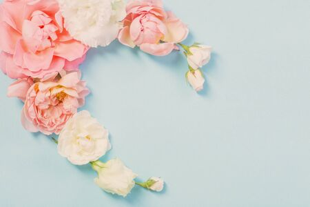 rose flowers on blue paper  background Stock Photo