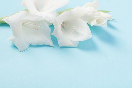 white gladiolus on blue background Stock Photo
