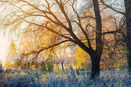 beautiful sunny autumn landscape with frost