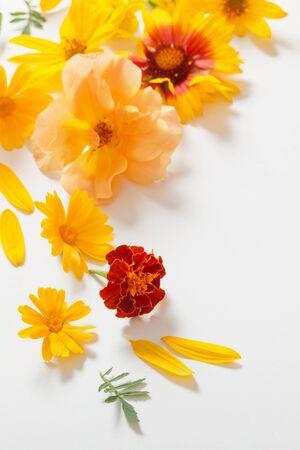 las flores amarillas y naranjas sobre fondo blanco Foto de archivo