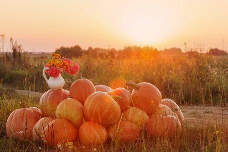 orange pumpkins with flowers on rural field at sunset Stok Fotoğraf