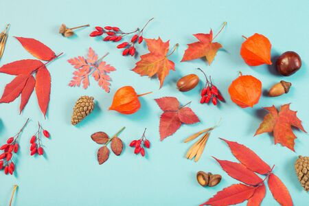 autumn leaves on blue paper background Stockfoto