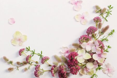 beautiful wildflowers on white paper background