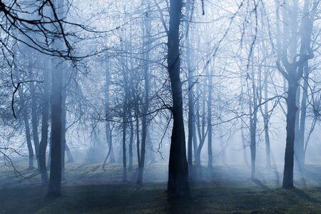 autumn park with mystery fog
