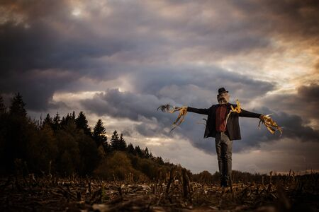 scarecrow stands in the autumn field against the evening sky