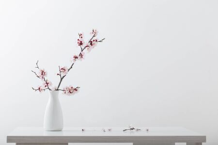 flowering pink cherry branch in  vase on white background