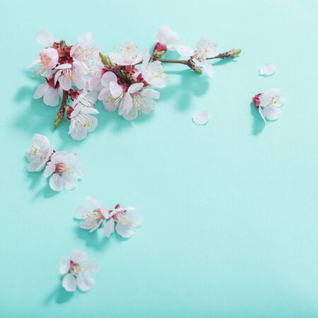 pink cherry flowers on green background Archivio Fotografico