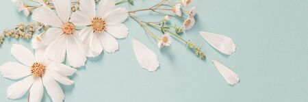 white flowers on green paper background Stock Photo