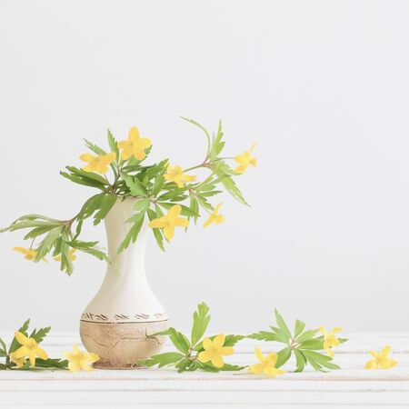 Still life with yellow spring flowers in vase on white background