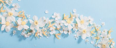 daffodils and cherry flowers on blue background background 免版税图像
