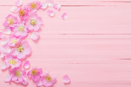 frame of pink roses on pink wooden background