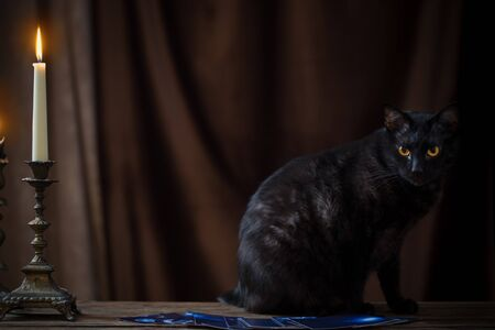 black cat, fortune-telling cards and burning candles on dark brown background