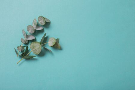 eucalyptus leaves on paper background