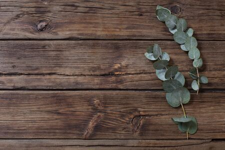 eucalyptus on old dark wooden background